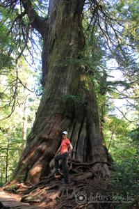 Charlene and a red cedar.
