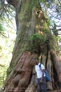 A Red Cedar Tree
