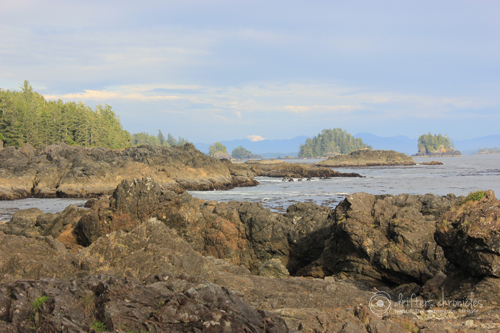 The Coastline on the Wild Pacific Trail